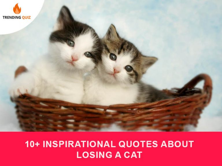 inspirational quotes about losing a cat